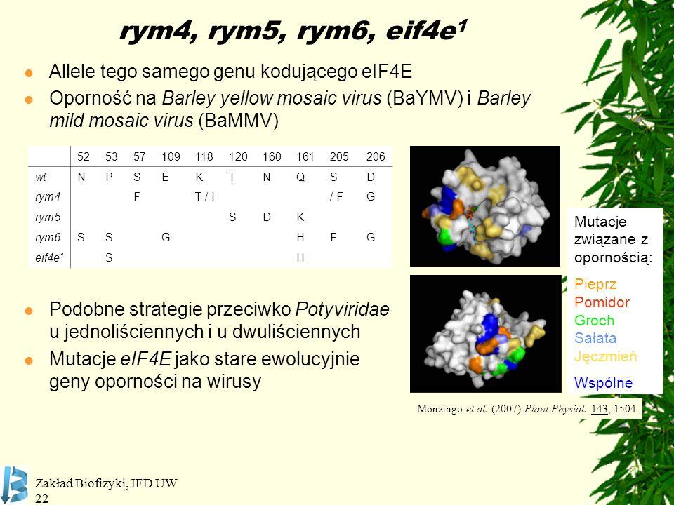 Zakład Biofizyki, IFD UW 22 rym4, rym5, rym6, eif4e 1 Allele tego samego genu kodującego eIF4E Oporność na Barley yellow mosaic virus (BaYMV) i Barley