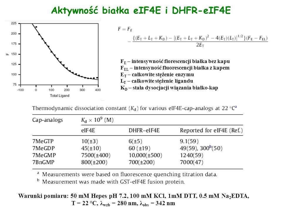 Aktywność białka eIF4E i DHFR-eIF4E F E – intensywność florescencji białka bez kapu F EL – intensyność fluorescencji białka z kapem E T – całkowite st