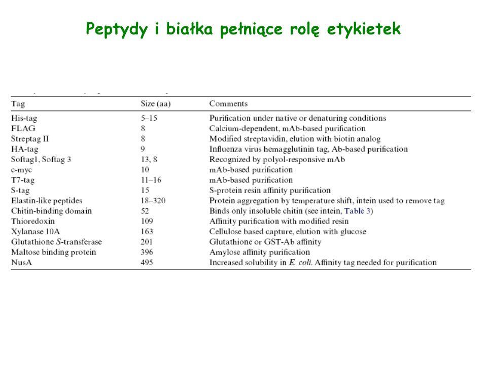 Zalety i wady etykietek Zalety: ułatwiają oczyszczenie rekombinowanych białek zwiększają wydajność ekspresji białka (np.: GST, MBP, NusA, Ubiquitin) ułatwiają zwijanie się białka( np.: SUMO) zwiększają rozpuszczalność białka( np.: MBP, NusA, SET) wysoka specyficzność do ligandu niskie koszty złoża (np.: GST, MBP, His 6 ) … Wady: powodują zmianę konformacji białka obniżają wydajność ekspresji białka wysokie koszty złoża …