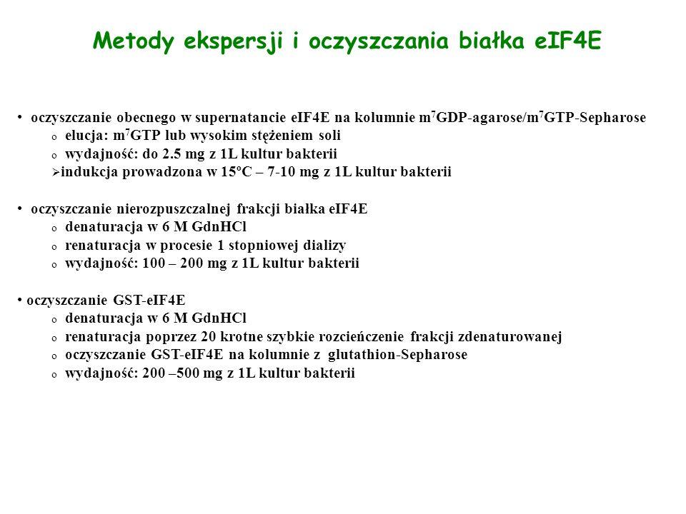 Metody ekspersji i oczyszczania białka eIF4E oczyszczanie obecnego w supernatancie eIF4E na kolumnie m 7 GDP-agarose/m 7 GTP-Sepharose o elucja: m 7 G