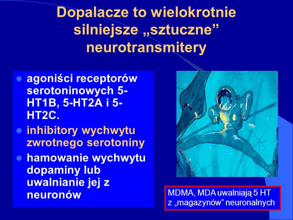 Dopalacze to wielokrotnie silniejsze sztuczne neurotransmitery agoniści receptorów serotoninowych 5- HT1B, 5-HT2A i 5- HT2C.