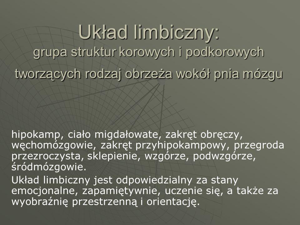 Układ limbiczny: grupa struktur korowych i podkorowych tworzących rodzaj obrzeża wokół pnia mózgu hipokamp, ciało migdałowate, zakręt obręczy, węchomó