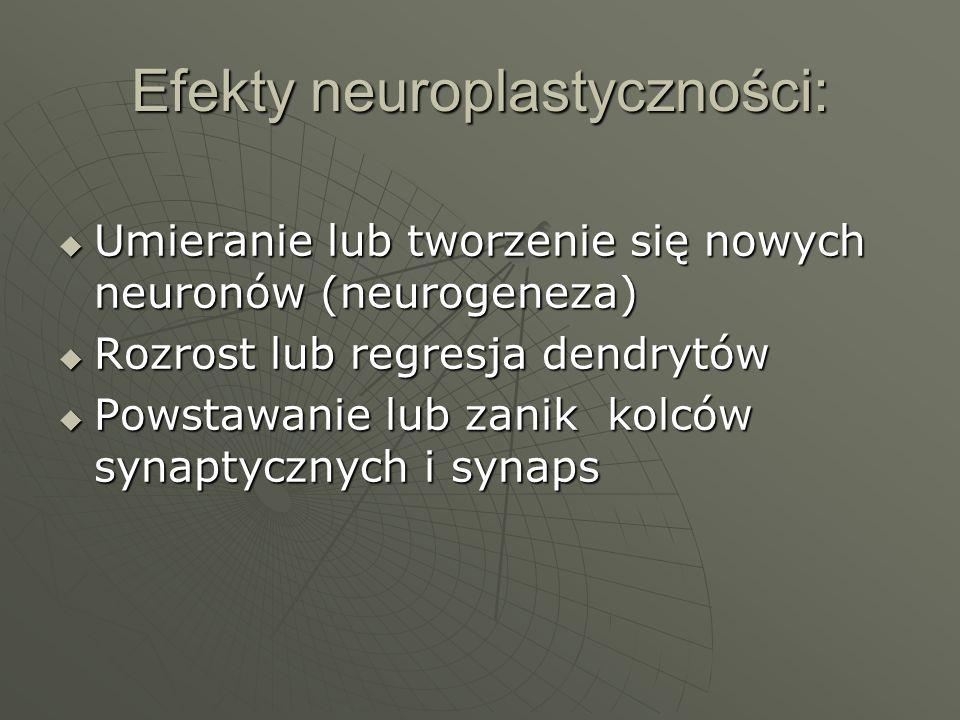 Efekty neuroplastyczności: Umieranie lub tworzenie się nowych neuronów (neurogeneza) Umieranie lub tworzenie się nowych neuronów (neurogeneza) Rozrost