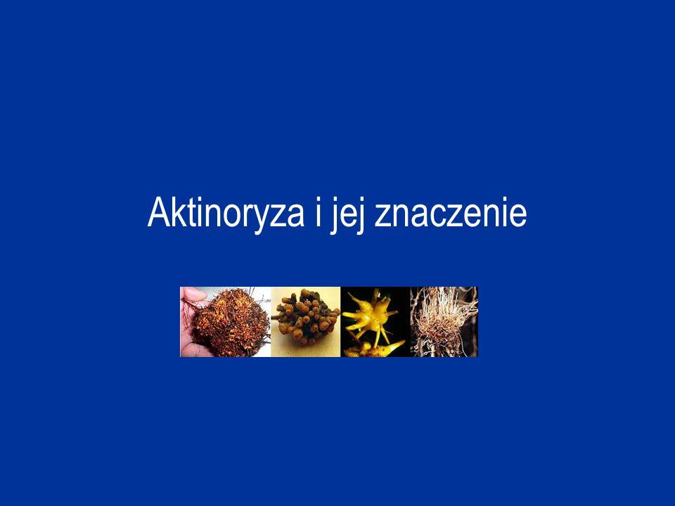 Aktinoryza to symbioza pomiędzy wiążącym azot promieniowcem z rodzaju Frankia oraz korzeniami niektórych drzew i krzewów okrytonasiennych.