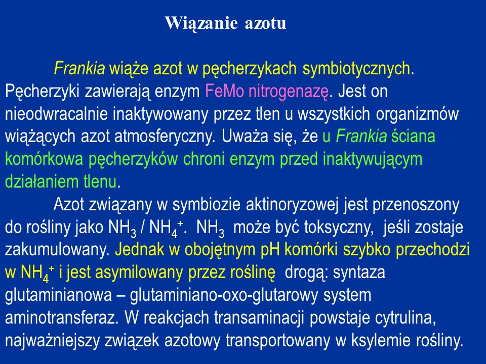 Wiązanie azotu Frankia wiąże azot w pęcherzykach symbiotycznych.