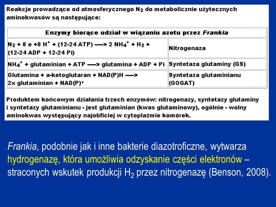 Frankia, podobnie jak i inne bakterie diazotroficzne, wytwarza hydrogenazę, która umożliwia odzyskanie części elektronów – straconych wskutek produkcji H 2 przez nitrogenazę (Benson, 2008).