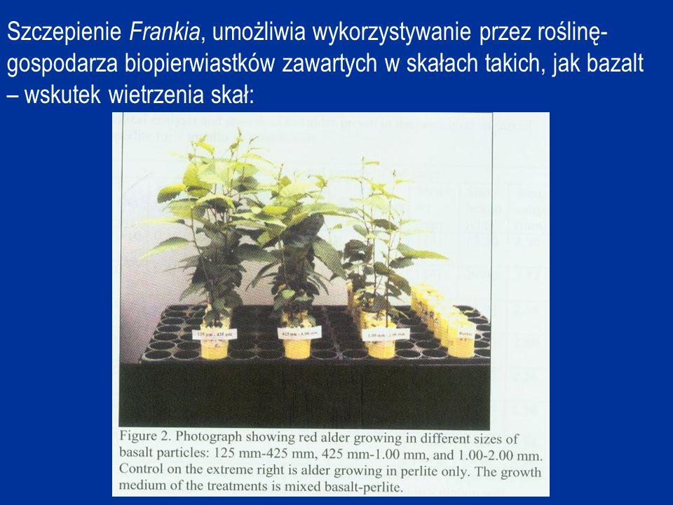 Szczepienie Frankia, umożliwia wykorzystywanie przez roślinę- gospodarza biopierwiastków zawartych w skałach takich, jak bazalt – wskutek wietrzenia skał: