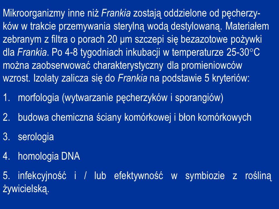Mikroorganizmy inne niż Frankia zostają oddzielone od pęcherzy- ków w trakcie przemywania sterylną wodą destylowaną.