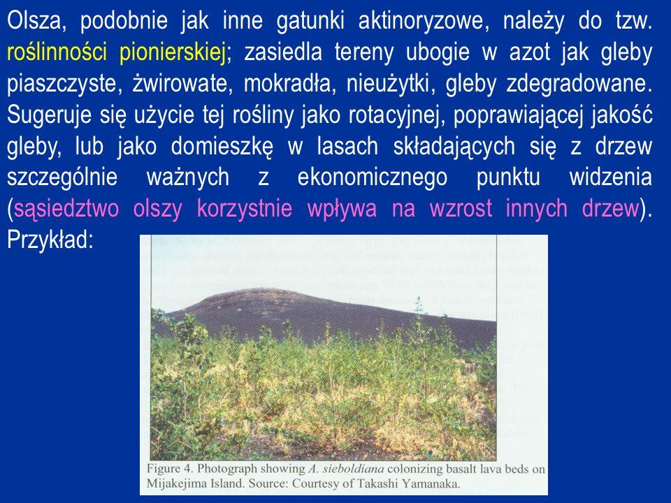 Frankia – mikrosymbiont Frankia jest Gram-dodatnim, powoli rosnącym, tlenowym promieniowcem o strzępkach podzielonych poprzecznymi przegrodami.