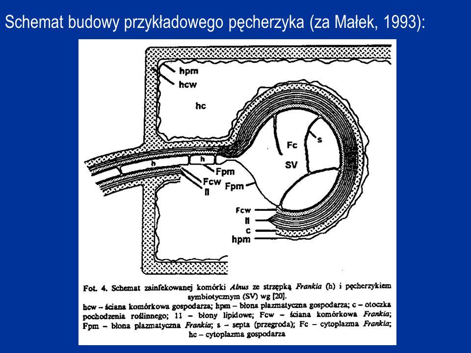 Znane są następujące metody izolowania Frankia : - seryjnych rozcieńczeń, - mikrosekcji, - selektywnej inkubacji, - wirowania w gradiencie sacharozy, - filtracji.