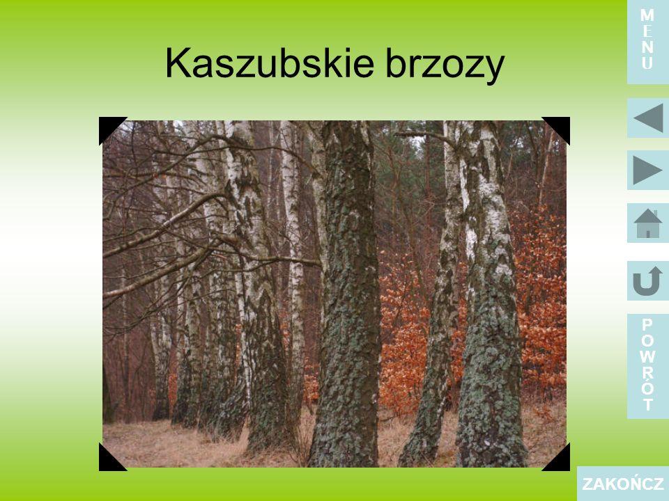 Kaszubski zespół ludowy POWRÓTPOWRÓT ZAKOŃCZ MENUMENU
