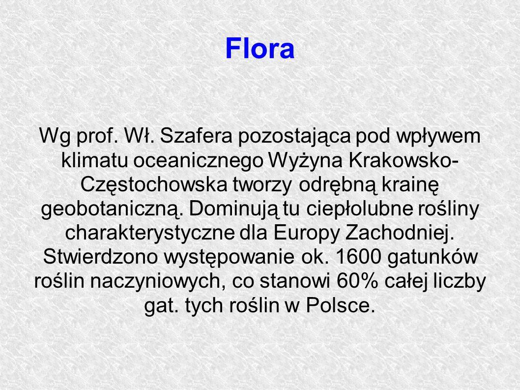 Flora Wg prof. Wł. Szafera pozostająca pod wpływem klimatu oceanicznego Wyżyna Krakowsko- Częstochowska tworzy odrębną krainę geobotaniczną. Dominują