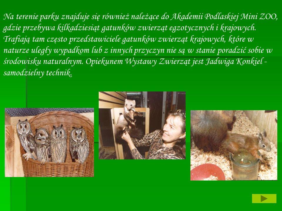 Na terenie parku znajduje się również należące do Akademii Podlaskiej Mini ZOO, gdzie przebywa kilkadziesiąt gatunków zwierząt egzotycznych i krajowyc