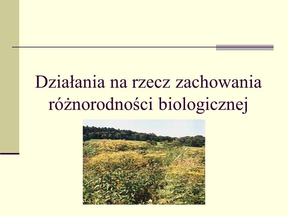Rekultywacja Wykonywanie określonych zabiegów biologicznych i technicznych, mających na celu przywrócenie obszarom zdewastowanym ich poprzednich właściwości N ajbardziej znaną na świecie akcją odnowowy biologicznej była między innymi rekultywacja Tamizy