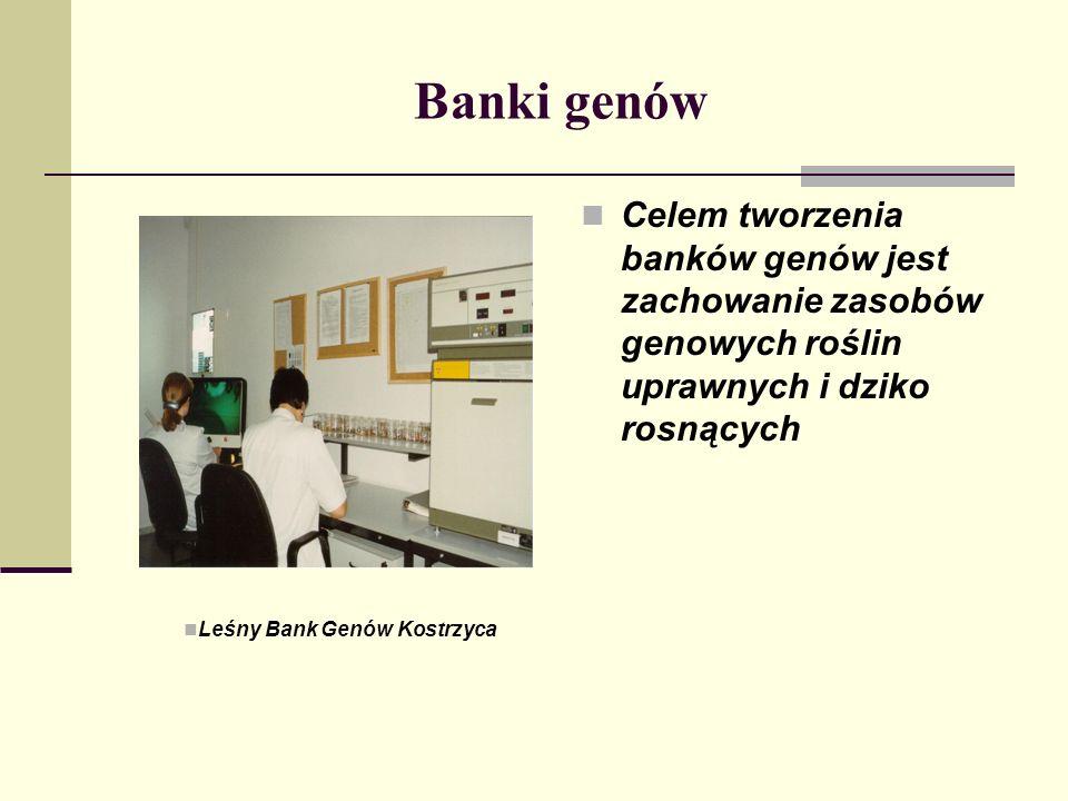 Banki genów Celem tworzenia banków genów jest zachowanie zasobów genowych roślin uprawnych i dziko rosnących Leśny Bank Genów Kostrzyca