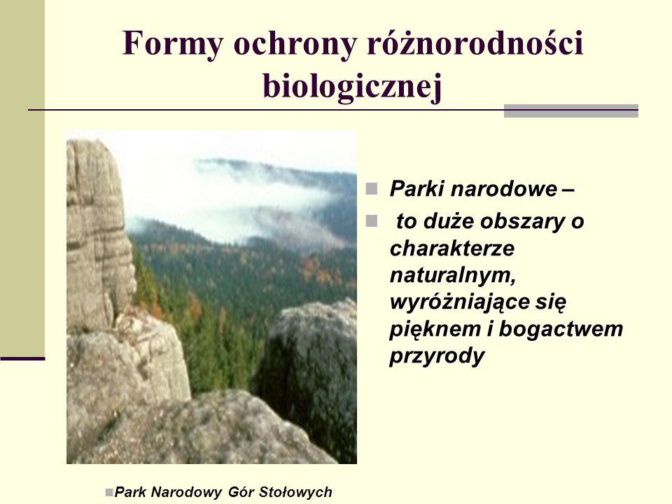 Formy ochrony różnorodności biologicznej Parki narodowe – Parki narodowe – to duże obszary o charakterze naturalnym, wyróżniające się pięknem i bogact
