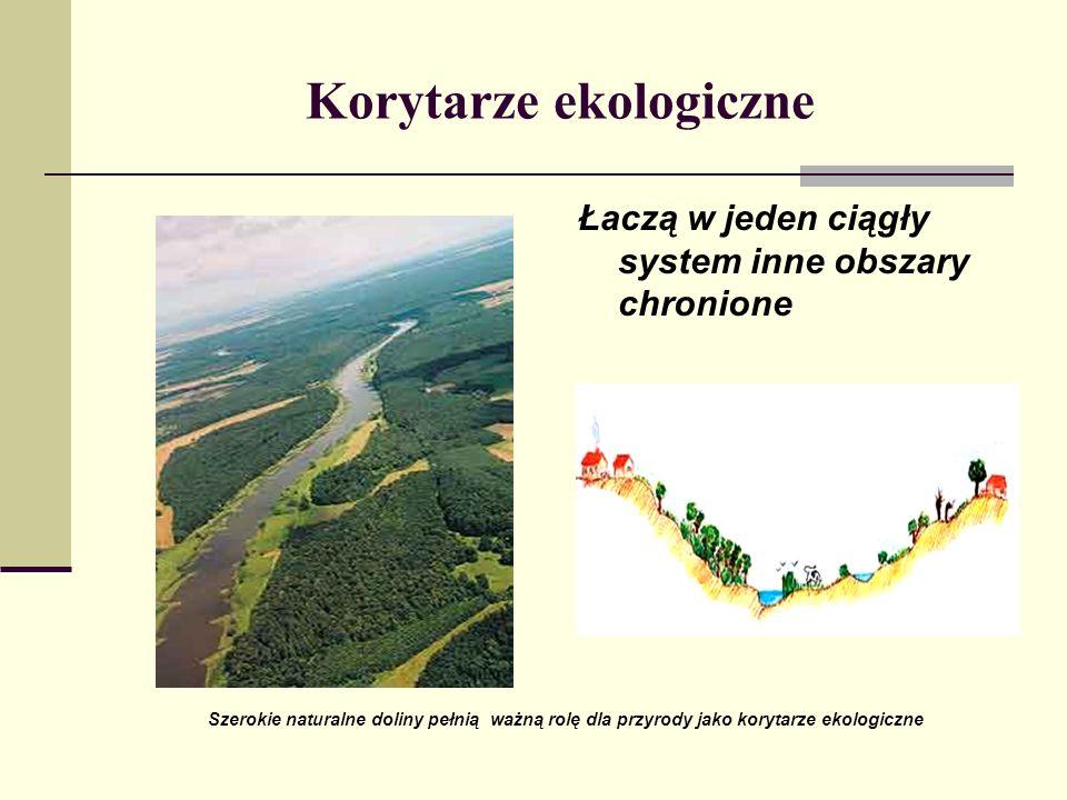 Korytarze ekologiczne Łaczą w jeden ciągły system inne obszary chronione Szerokie naturalne doliny pełnią ważną rolę dla przyrody jako korytarze ekolo