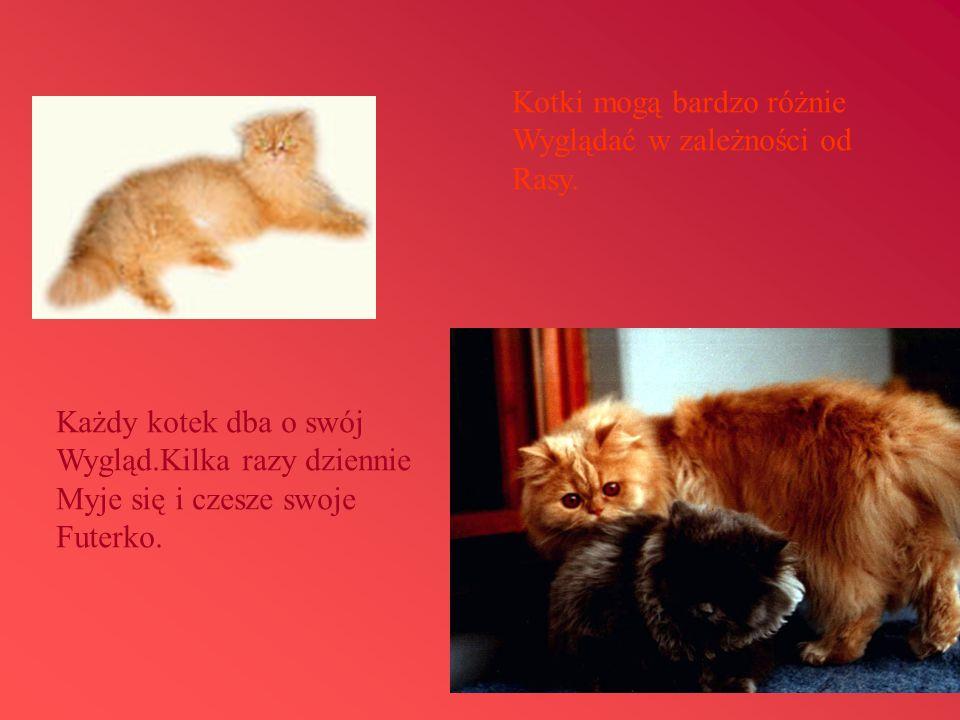 Kotki mogą bardzo różnie Wyglądać w zależności od Rasy. Każdy kotek dba o swój Wygląd.Kilka razy dziennie Myje się i czesze swoje Futerko.
