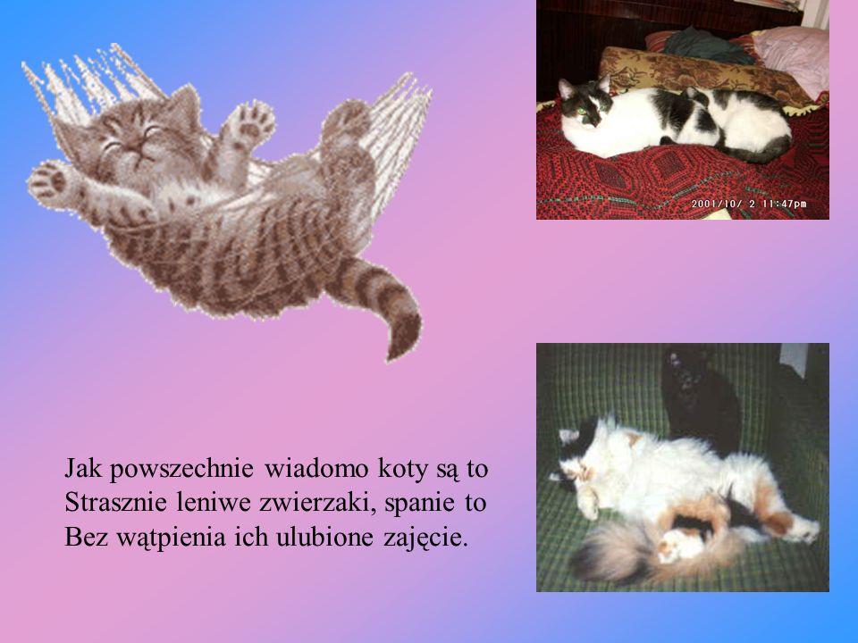 Jak powszechnie wiadomo koty są to Strasznie leniwe zwierzaki, spanie to Bez wątpienia ich ulubione zajęcie.