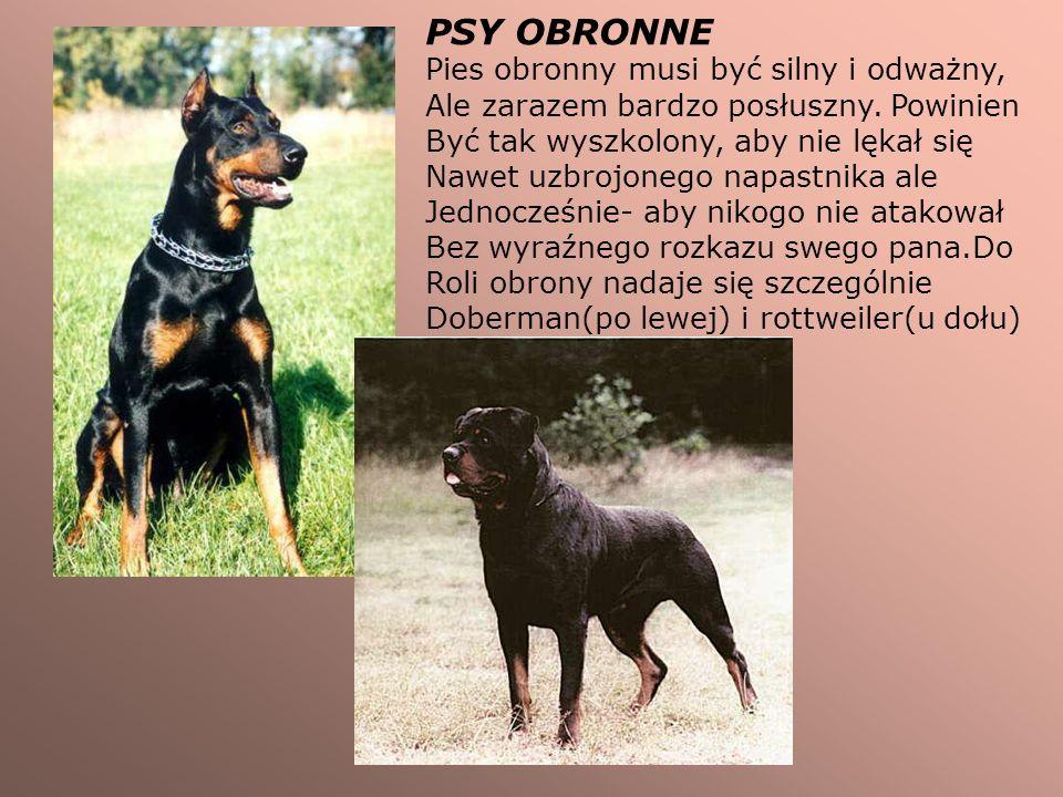 PSY OBRONNE Pies obronny musi być silny i odważny, Ale zarazem bardzo posłuszny. Powinien Być tak wyszkolony, aby nie lękał się Nawet uzbrojonego napa