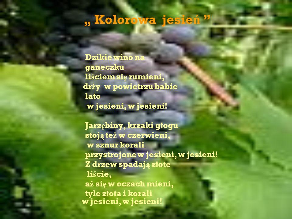 Kolorowa jesie ń Dzikie wino na ganeczku li ś ciem si ę rumieni, dr ż y w powietrzu babie lato w jesieni, w jesieni.