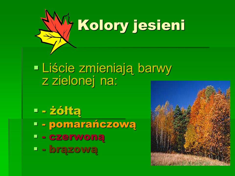 Kolory jesieni Kolory jesieni Liście zmieniają barwy z zielonej na: - żółtą - pomarańczową - czerwoną - brązową