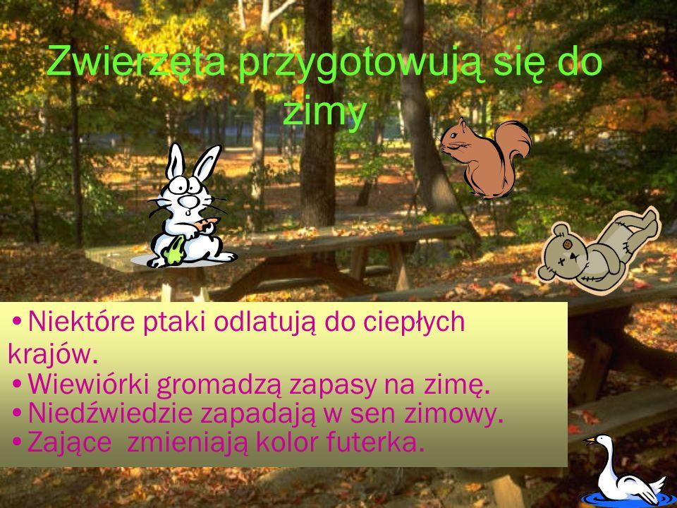 DARY JESIENI DARY JESIENI Owoce Warzywa Owoce Warzywa - jabłka - marchew - jabłka - marchew - gruszki - pietruszka - gruszki - pietruszka - śliwki - buraki - śliwki - buraki - jeżyny - selery - jeżyny - selery