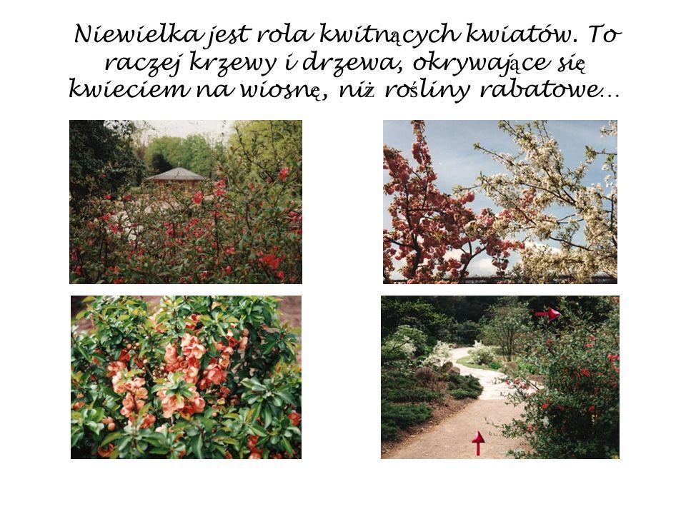 Niewielka jest rola kwitn ą cych kwiatów. To raczej krzewy i drzewa, okrywaj ą ce si ę kwieciem na wiosn ę, ni ż ro ś liny rabatowe…