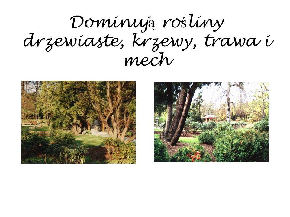 Dominuj ą ro ś liny drzewiaste, krzewy, trawa i mech