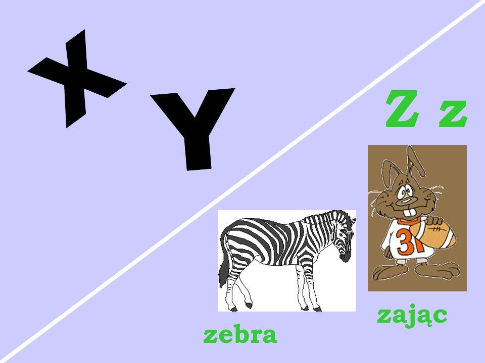 Z z zebra zając