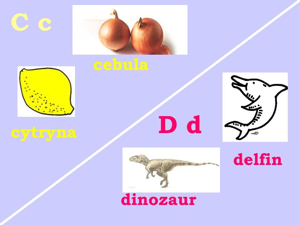 cytryna cebula C c D d delfin dinozaur
