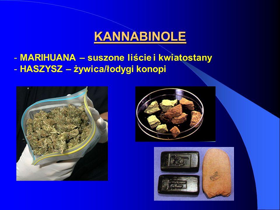KANNABINOLE - MARIHUANA – suszone liście i kwiatostany - HASZYSZ – żywica/łodygi konopi