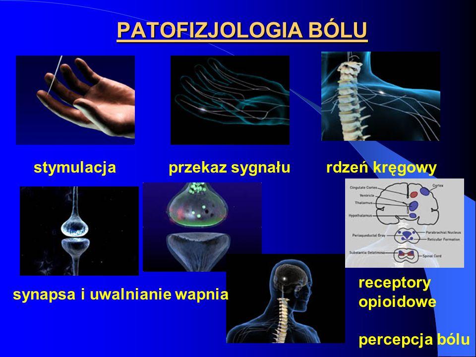 PATOFIZJOLOGIA BÓLU stymulacja przekaz sygnału rdzeń kręgowy synapsa i uwalnianie wapnia receptory opioidowe percepcja bólu