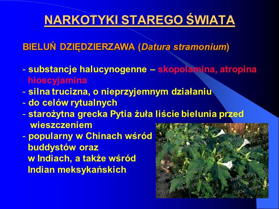 NARKOTYKI STAREGO ŚWIATA BIELUŃ DZIĘDZIERZAWA (Datura stramonium) - substancje halucynogenne – skopolamina, atropina hioscyjamina - silna trucizna, o