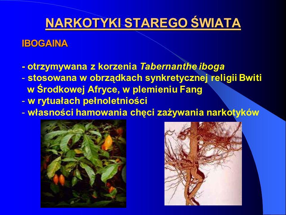 NARKOTYKI STAREGO ŚWIATA IBOGAINA - otrzymywana z korzenia Tabernanthe iboga - stosowana w obrządkach synkretycznej religii Bwiti w Środkowej Afryce,