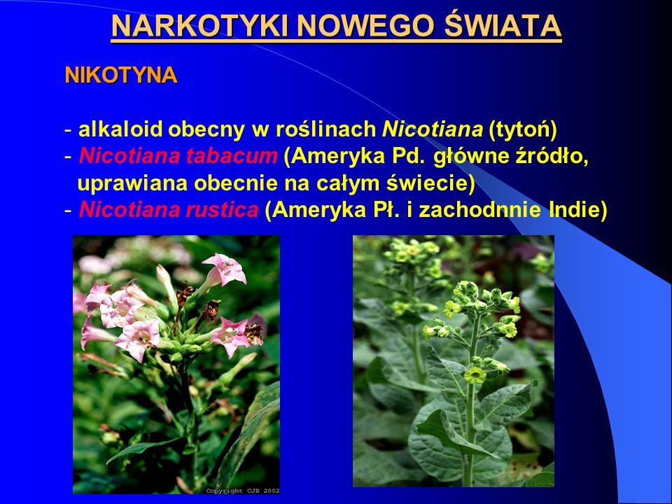 NIKOTYNA - alkaloid obecny w roślinach Nicotiana (tytoń) - Nicotiana tabacum (Ameryka Pd. główne źródło, uprawiana obecnie na całym świecie) - Nicotia