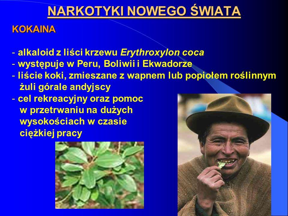 NARKOTYKI NOWEGO ŚWIATA KOKAINA - alkaloid z liści krzewu Erythroxylon coca - występuje w Peru, Boliwii i Ekwadorze - liście koki, zmieszane z wapnem