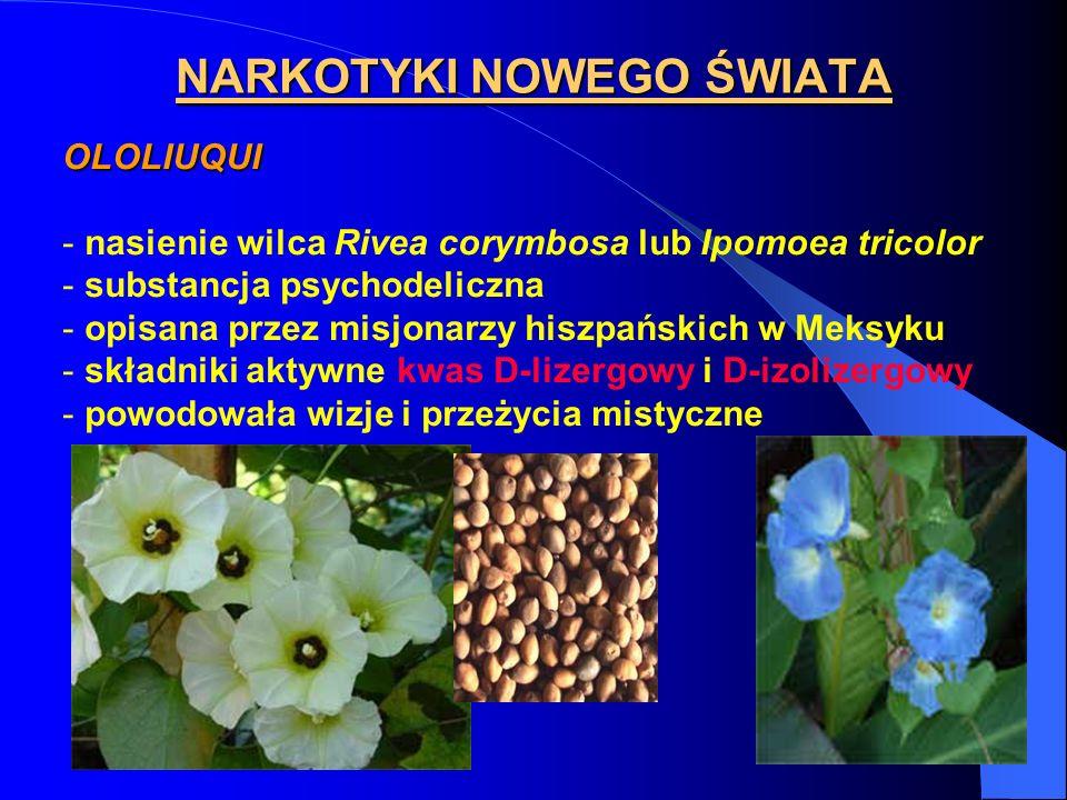NARKOTYKI NOWEGO ŚWIATA OLOLIUQUI - nasienie wilca Rivea corymbosa lub Ipomoea tricolor - substancja psychodeliczna - opisana przez misjonarzy hiszpań