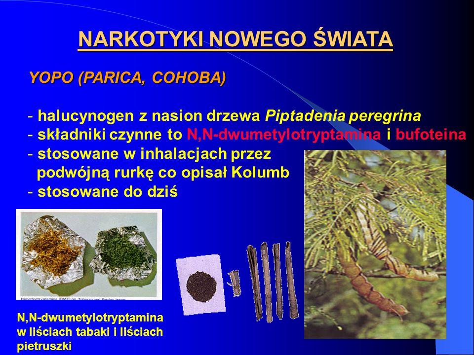 NARKOTYKI NOWEGO ŚWIATA YOPO (PARICA, COHOBA) - halucynogen z nasion drzewa Piptadenia peregrina - składniki czynne to N,N-dwumetylotryptamina i bufot
