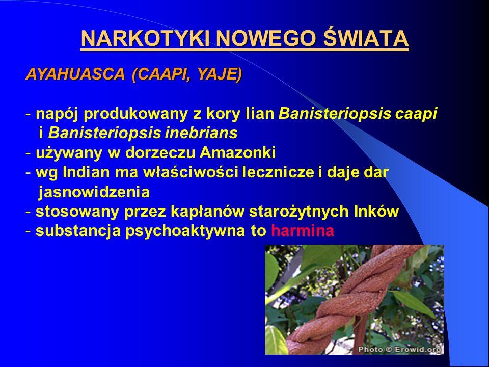 NARKOTYKI NOWEGO ŚWIATA AYAHUASCA (CAAPI, YAJE) - napój produkowany z kory lian Banisteriopsis caapi i Banisteriopsis inebrians - używany w dorzeczu A