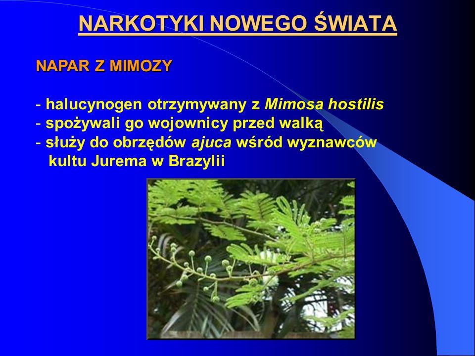 NARKOTYKI NOWEGO ŚWIATA NAPAR Z MIMOZY - halucynogen otrzymywany z Mimosa hostilis - spożywali go wojownicy przed walką - służy do obrzędów ajuca wśró