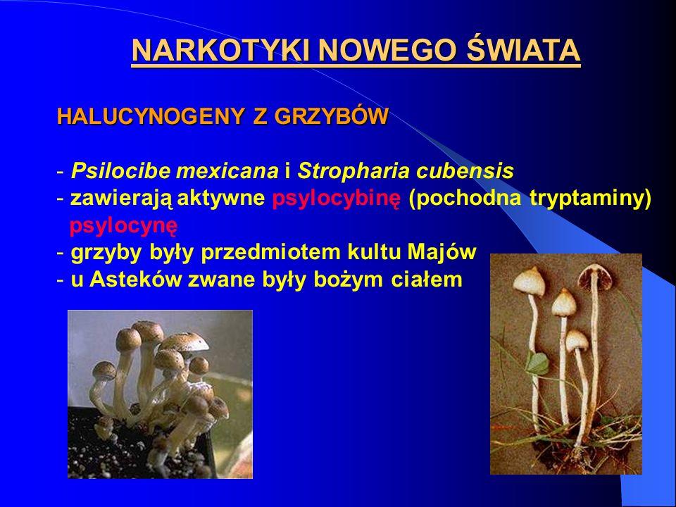 NARKOTYKI NOWEGO ŚWIATA HALUCYNOGENY Z GRZYBÓW - Psilocibe mexicana i Stropharia cubensis - zawierają aktywne psylocybinę (pochodna tryptaminy) psyloc