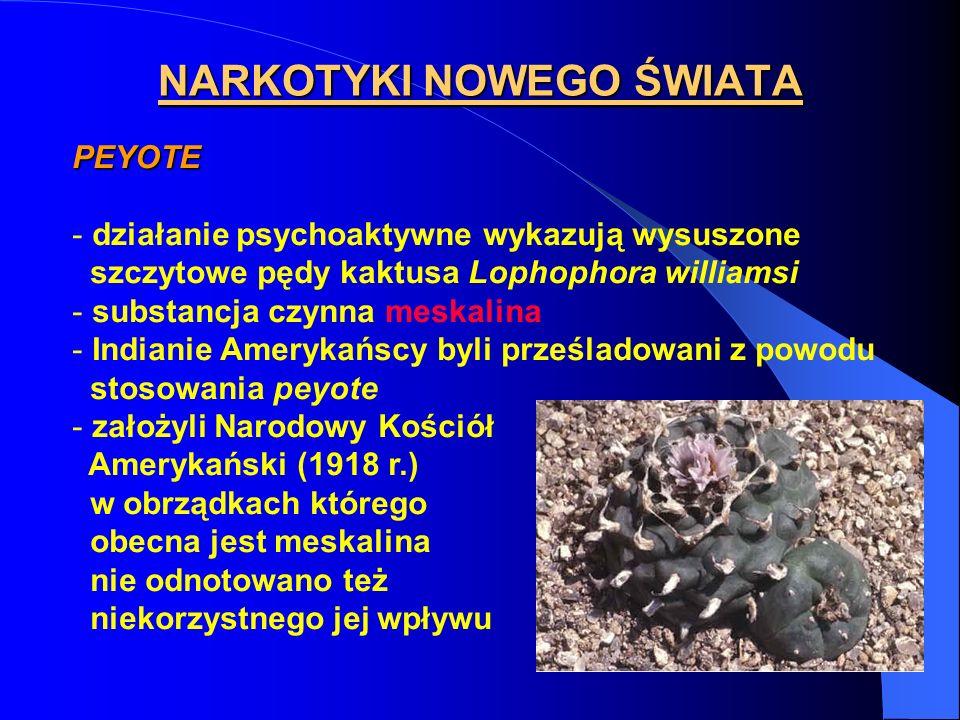 NARKOTYKI NOWEGO ŚWIATA PEYOTE - działanie psychoaktywne wykazują wysuszone szczytowe pędy kaktusa Lophophora williamsi - substancja czynna meskalina