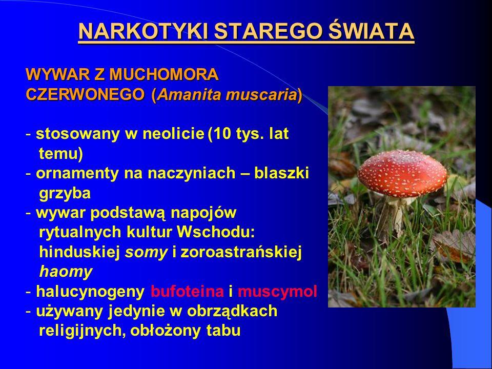 WYWAR Z MUCHOMORA CZERWONEGO (Amanita muscaria) - stosowany w neolicie (10 tys. lat temu) - ornamenty na naczyniach – blaszki grzyba - wywar podstawą