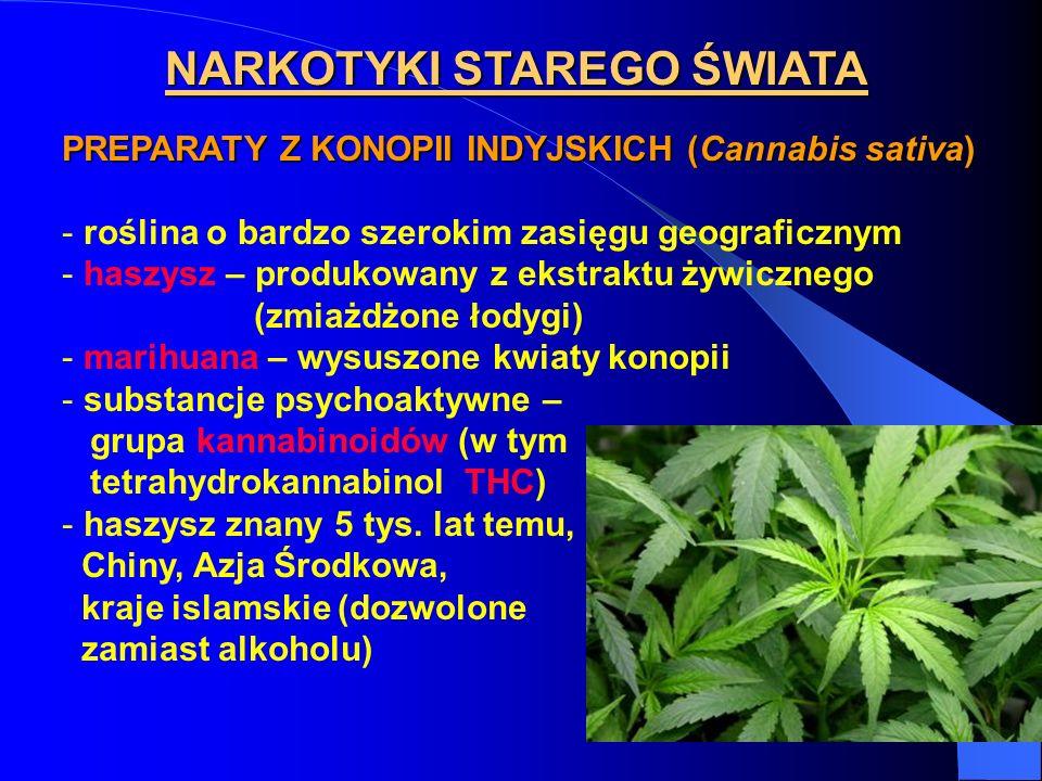 NARKOTYKI STAREGO ŚWIATA PREPARATY Z KONOPII INDYJSKICH (Cannabis sativa) - roślina o bardzo szerokim zasięgu geograficznym - haszysz – produkowany z