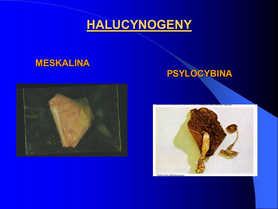 HALUCYNOGENY MESKALINA PSYLOCYBINA