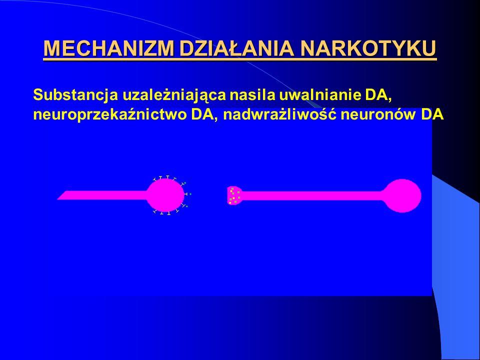 MECHANIZM DZIAŁANIA NARKOTYKU Substancja uzależniająca nasila uwalnianie DA, neuroprzekaźnictwo DA, nadwrażliwość neuronów DA