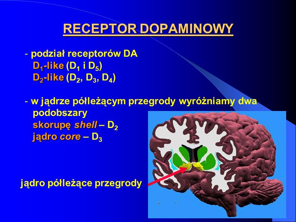 RECEPTOR DOPAMINOWY - podział receptorów DA D 1 -like D 1 -like (D 1 i D 5 ) D 2 -like D 2 -like (D 2, D 3, D 4 ) - w jądrze półleżącym przegrody wyróżniamy dwa podobszary skorupę shell skorupę shell – D 2 jądro core jądro core – D 3 jądro półleżące przegrody