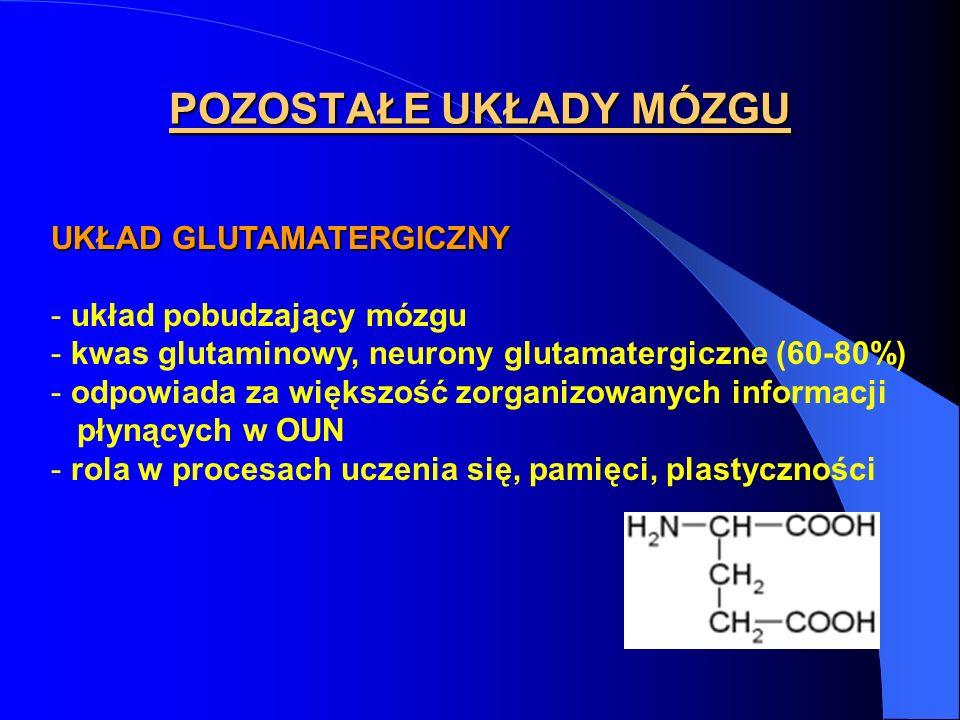 POZOSTAŁE UKŁADY MÓZGU UKŁAD GLUTAMATERGICZNY - układ pobudzający mózgu - kwas glutaminowy, neurony glutamatergiczne (60-80%) - odpowiada za większość zorganizowanych informacji płynących w OUN - rola w procesach uczenia się, pamięci, plastyczności