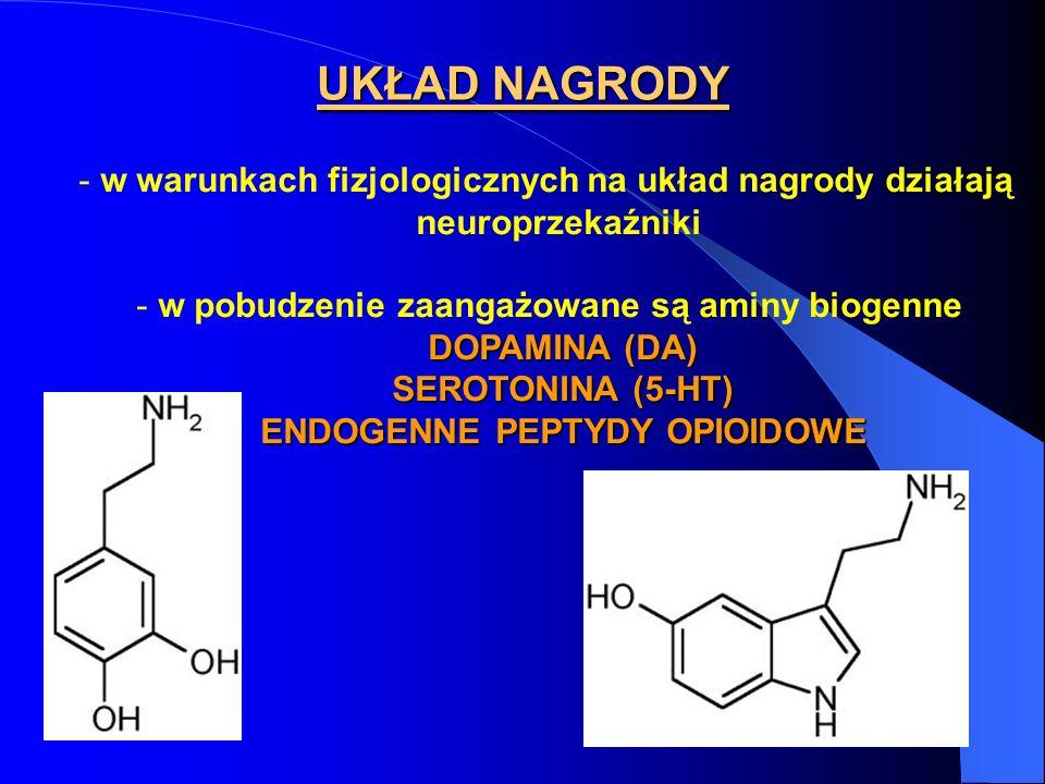 - w warunkach fizjologicznych na układ nagrody działają neuroprzekaźniki - w pobudzenie zaangażowane są aminy biogenne DOPAMINA (DA) SEROTONINA (5-HT) SEROTONINA (5-HT) ENDOGENNE PEPTYDY OPIOIDOWE ENDOGENNE PEPTYDY OPIOIDOWE